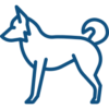 border-collie (1)